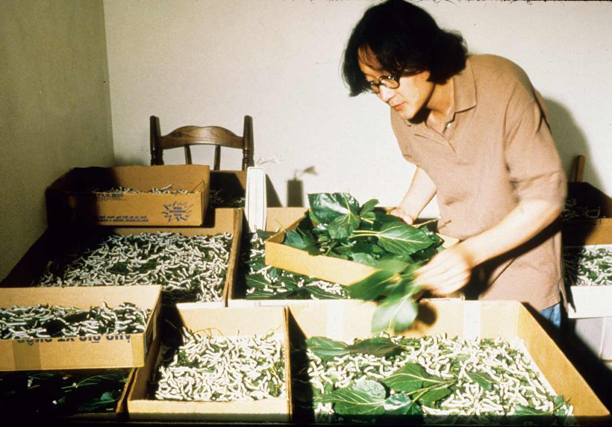 American Silkworm Series Part II